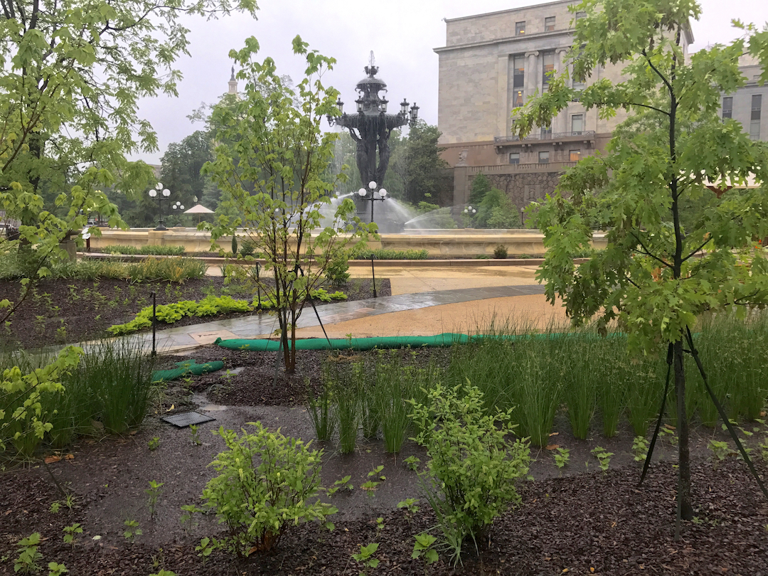 rain garden in barthooldi park shown capturing rain