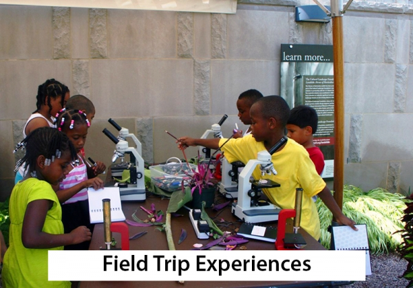 Field Trip Experiences -- children using microscopes